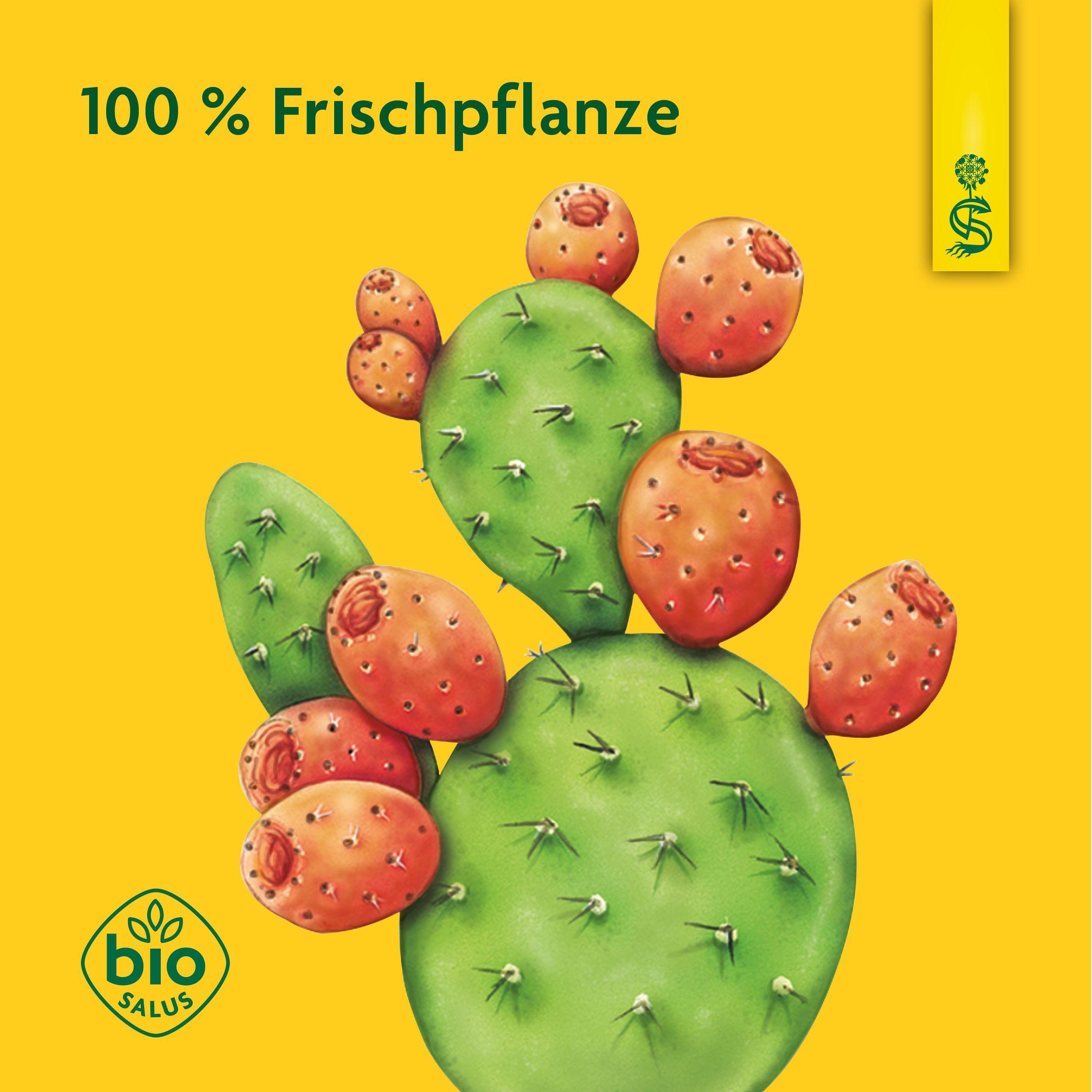 Grüner Feigenkaktus-Saft zur Gewichtsreduktion